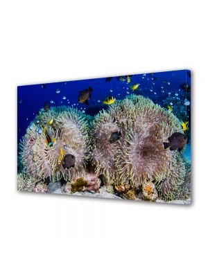 Tablou Canvas Luminos in intuneric VarioView LED Animale Recif de corali