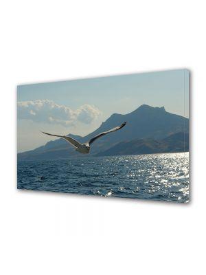 Tablou Canvas Animale Pescarus deasupra lacului