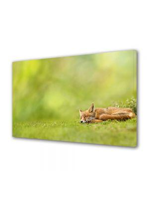 Tablou Canvas Luminos in intuneric VarioView LED Animale Vulpe adormita