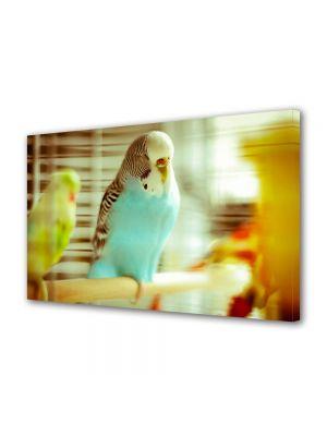Tablou Canvas Animale Papagal adormit