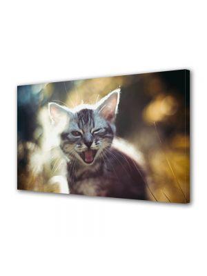 Tablou Canvas Luminos in intuneric VarioView LED Animale Pisica somnoroasa