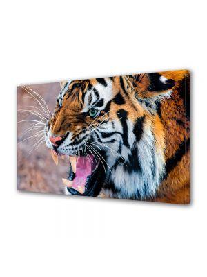 Tablou Canvas Animale Tigru furios