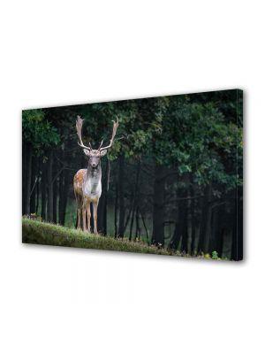 Tablou Canvas Animale Cerb cu coarne imense