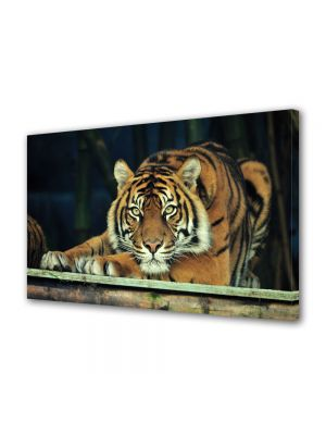 Tablou Canvas Luminos in intuneric VarioView LED Animale Tigru sumatran