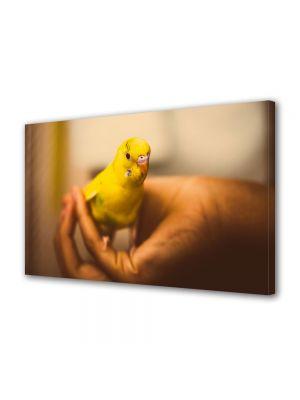 Tablou Canvas Animale Papagal de casa