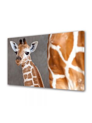 Tablou Canvas Luminos in intuneric VarioView LED Animale Girafa tanara