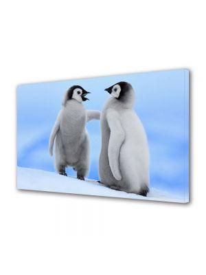 Tablou Canvas Animale Pui de pinguin
