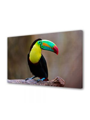 Tablou Canvas Animale Pasare exotica Toucan
