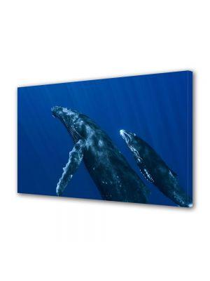 Tablou Canvas Luminos in intuneric VarioView LED Animale Balene in ocean