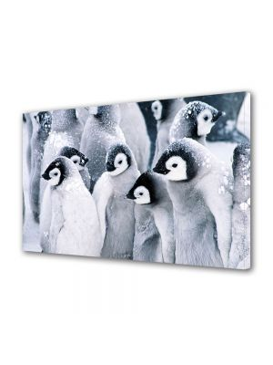 Tablou Canvas Animale Pui de pinguini