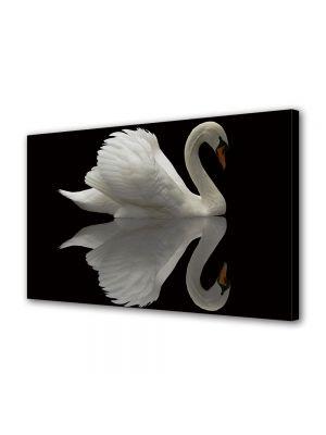 Tablou Canvas Animale Lebada alba reflexie