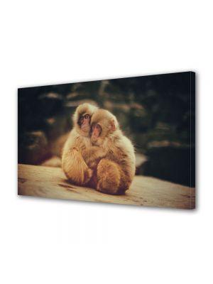 Tablou Canvas Animale Maimutele imbratisate