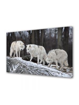Tablou Canvas Animale Haita de lupi albi