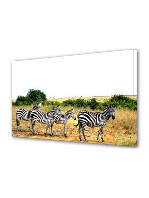 Tablou Canvas Animale Dungi de zebre