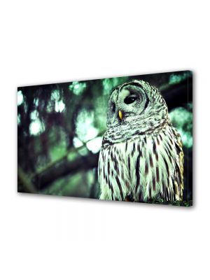 Tablou Canvas Luminos in intuneric VarioView LED Animale Bufnita in padure