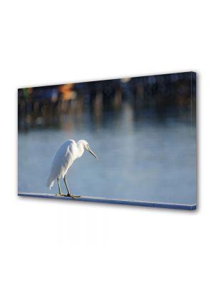 Tablou Canvas Luminos in intuneric VarioView LED Animale Pescarus alb