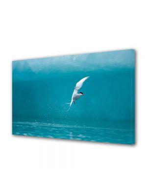 Tablou Canvas Animale Pasare alba deasupra apei