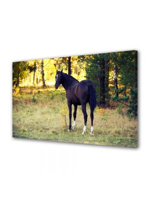 Tablou Canvas Luminos in intuneric VarioView LED Animale Cal negru in padure