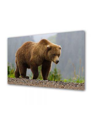 Tablou Canvas Animale Urs maroniu