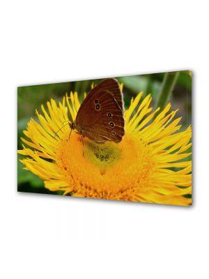 Tablou Canvas Animale Fluture maroniu