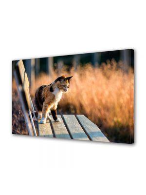 Tablou Canvas Animale Pisica curioasa pe banca