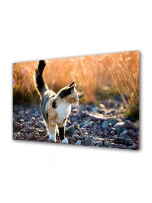 Tablou Canvas Luminos in intuneric VarioView LED Animale Pisica in gradina