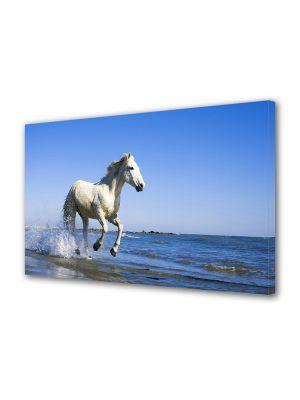 Tablou Canvas Luminos in intuneric VarioView LED Animale Cu calul pe plaja