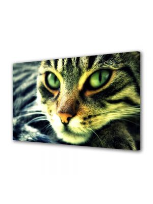 Tablou Canvas Animale Pisica rasfatata