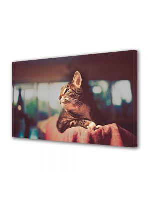 Tablou Canvas Animale Poza vintage a unei pisici