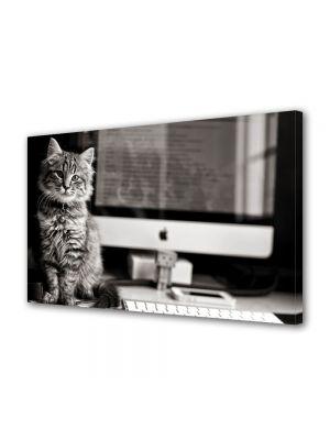 Tablou Canvas Animale Pisica la calculator