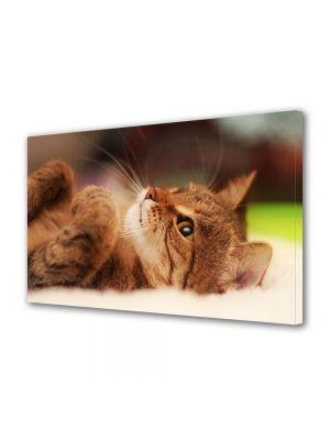 Tablou Canvas Animale Pisica cool