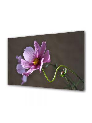 Tablou Canvas Flori Gratie