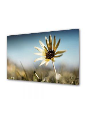 Tablou Canvas Flori Floare de colt