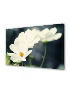 Tablou Canvas Flori Flori albicioase