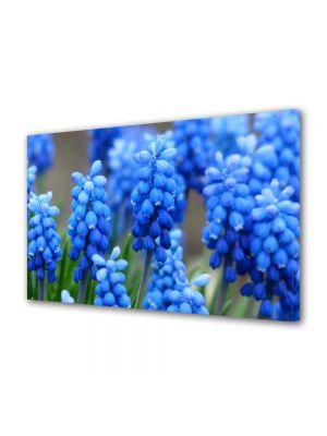 Tablou Canvas Flori Flori albastre Muscari