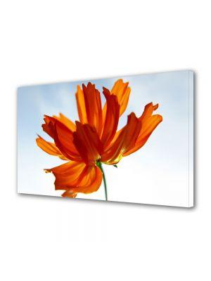 Tablou Canvas Flori Floare in lumina soarelui