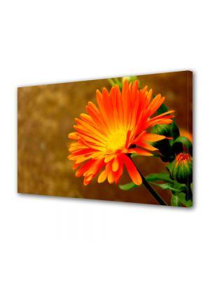 Tablou Canvas Luminos in intuneric VarioView LED Flori Floare Portocalie