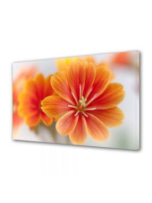 Tablou Canvas Luminos in intuneric VarioView LED Flori Floare Lewisia