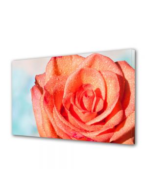 Tablou Canvas Flori Trandafir portocaliu
