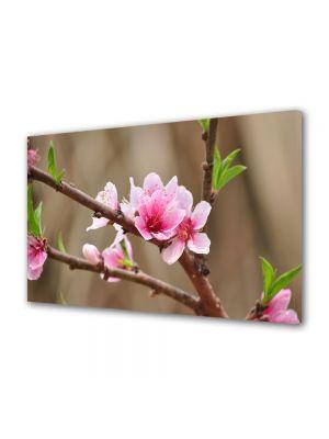 Tablou Canvas Flori Flori de piersic