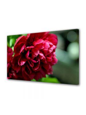 Tablou Canvas Flori Bujori rosii