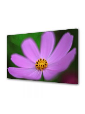 Tablou VarioView MoonLight Fosforescent Luminos in intuneric Flori Floare violet si galbena