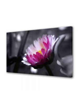 Tablou Canvas Flori Floare roz pe fundal negru