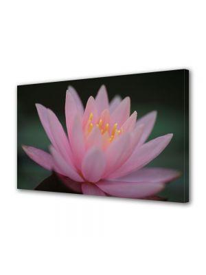 Tablou Canvas Flori Liliac de apa roz