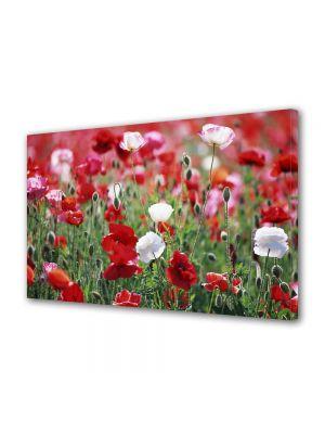 Tablou Canvas Flori Camp de maci