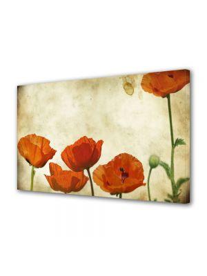 Tablou Canvas Flori Maci stilizati