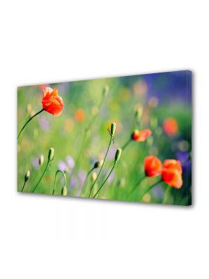 Tablou Canvas Flori Maci de camp