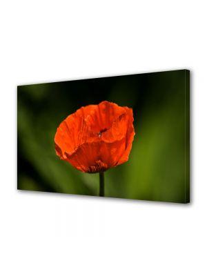 Tablou Canvas Flori Floare de mac