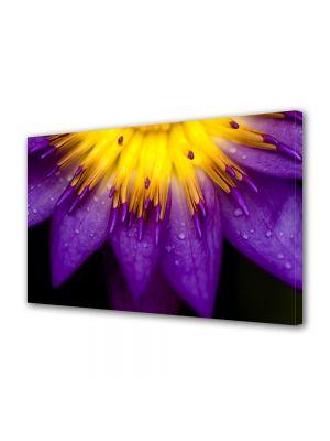 Tablou Canvas Flori Petale violet si galbene