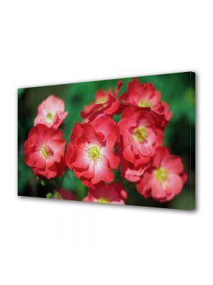 Tablou Canvas Flori Trandafiri de gradina